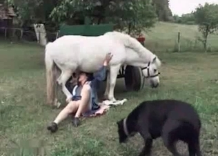Horse gets the best BJ ever