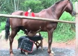 Horse gets to fuck her like a total slut
